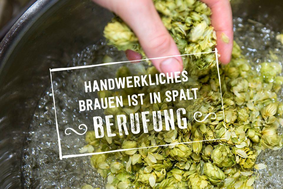 Der Spalter Aromahopfen ist einer der Gründe, warum Spalter Bier so besonders lecker schmeckt.