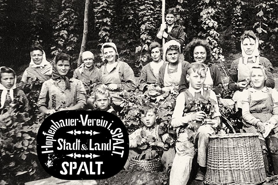 Kinder und Frauen bei der Hopfenernte in Spalt um 1950