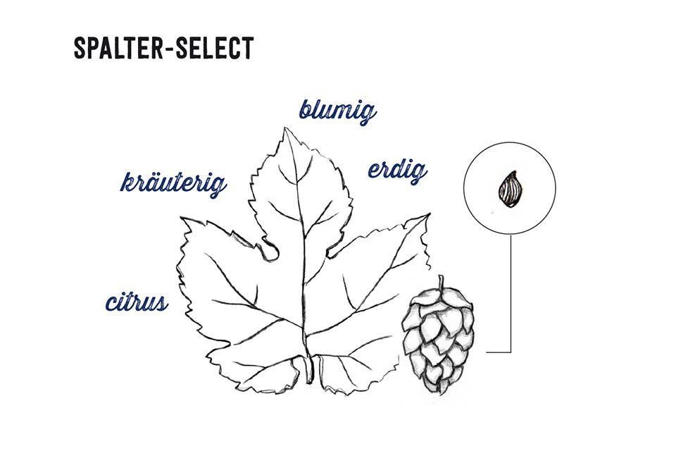 Spalt-Select