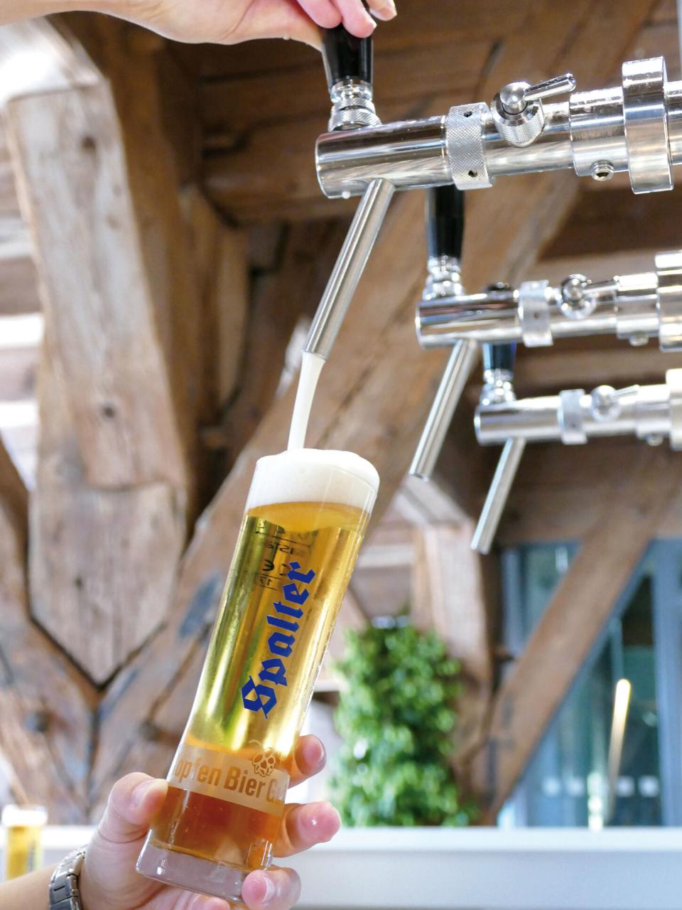 Aus Hopfen wird Bier